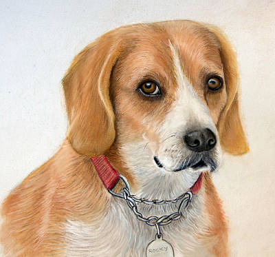 Drawing - Rocky by Mary Mayes