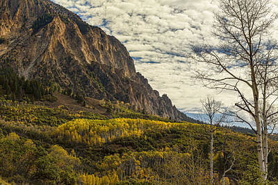 Forest Photograph - Rocky Mountain Autumn Glory by James BO  Insogna