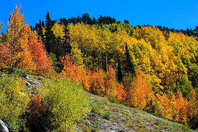 Photograph - Rocky Mountain Autumn by Tikvah's Hope