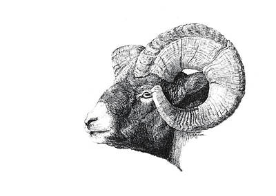 Yellowstone Drawing - Rocky Mountain Bighorn Sheep by George Bumann