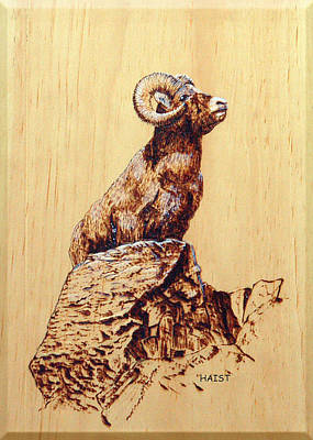 Pyrography - Rocky Mountain Bighorn Sheep by Ron Haist