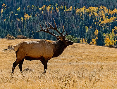 Digital Art - Rocky Mountain Bull Elk by Ernie Echols