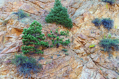 Photograph - Rocky Mountain Canyon Wall  Trees And Color by James BO Insogna