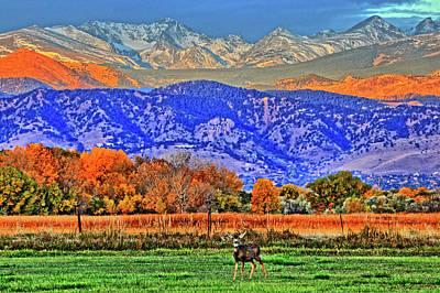 Art Print featuring the photograph Rocky Mountain Deer by Scott Mahon
