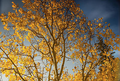 Photograph - Rocky Mountain Fall Colors by Kunal Mehra