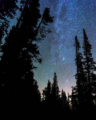 Rocky Mountain Forest Night Print by James BO Insogna