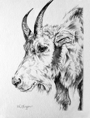Antelope Drawing - Rocky Mountain Goat by Derrick Higgins
