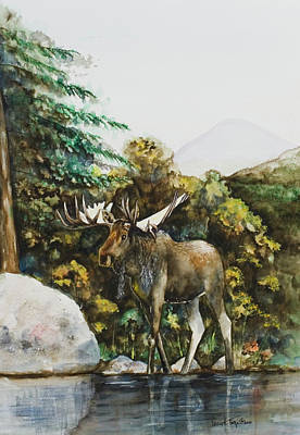 Painting - Rocky Mountain Moose by Laurie Tietjen