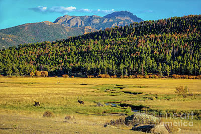 Photograph - Rocky Mountain National Park Elk by Jon Burch Photography