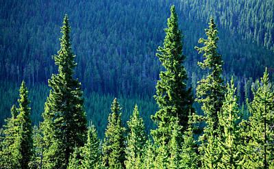 Pine Needles Photograph - Rocky Mountain Skyline by Todd Klassy