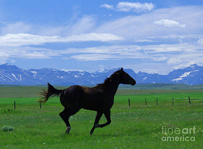 Photograph - Rocky Mountain Stallion by Jack Moskovita