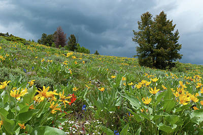 Photograph - Rocky Mountain Summer Meadow And Rain Clouds by Cascade Colors