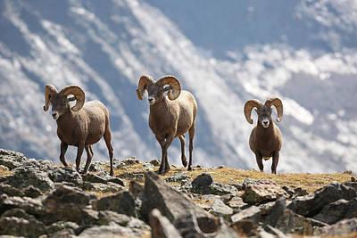 Photograph - Rocky Mountain Three Kings by Zach Rockvam