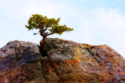 Photograph - Rocky Mountain Tree by James BO Insogna