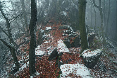 Photograph - Rocky Path.  In Mysterious Woods by Jenny Rainbow