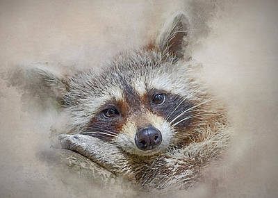Photograph - Rocky Raccoon by Brian Tarr