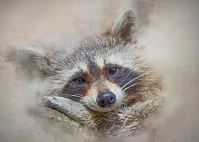 Photograph - Rocky Raccoon by Brian Tarr