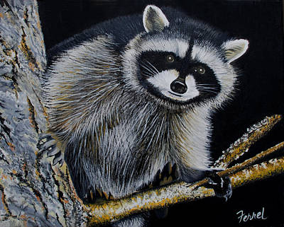 Painting - Rocky Raccoon by Ferrel Cordle