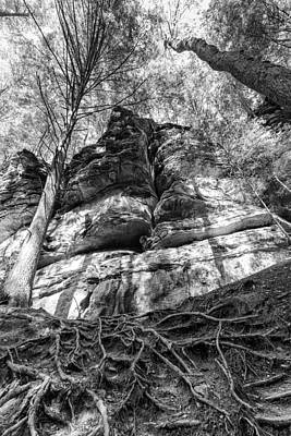 Photograph - Rocky Roots by Alan Raasch