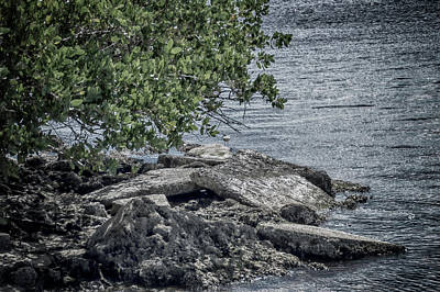 Photograph - Rocky Shore by Judy Hall-Folde