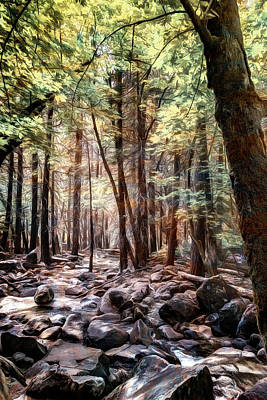 Photograph - Rocky Stream Bed by Maria Coulson