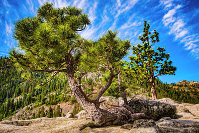 Photograph - Rocky-top Pine Tree by Steven Ainsworth