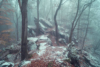 Photograph - Rocky Trail In Misty Woods by Jenny Rainbow