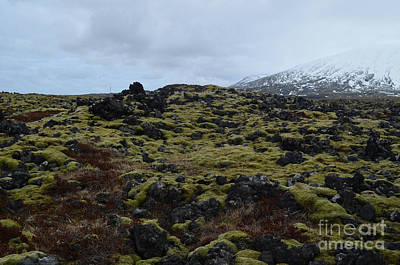 Photograph - Rocky Volcanic Rocks With Lush Green Moss  by DejaVu Designs