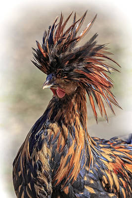 Photograph - Rod Stewart Ala Chicken by Wes and Dotty Weber