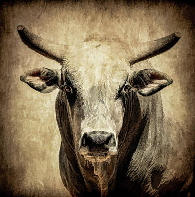 Photograph - Rodeo Bull Iv by Athena Mckinzie