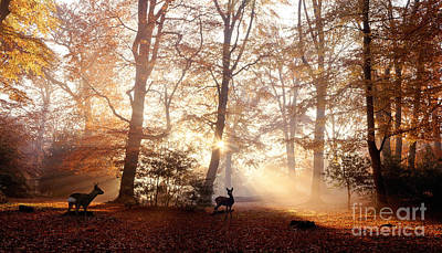Photograph - Roe Deer At Sunrise In The New Forest by Warren Photographic