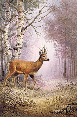 Stag Painting - Roe Deer by Carl Donner