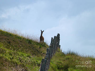 Photograph - Roe Doe Hilltop by Phil Banks