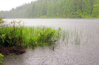 Photograph - Rolley Lake Reeds In The Rain by Sharon Talson