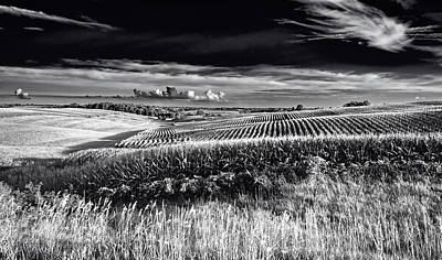 Cornfield Photograph - Rolling Cornfields In Iowa by Mountain Dreams