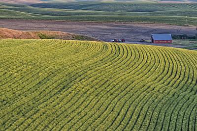 Photograph - Rolling Field Of Wheat On Farm In Palouse Wa Dsc04972 by Greg Kluempers