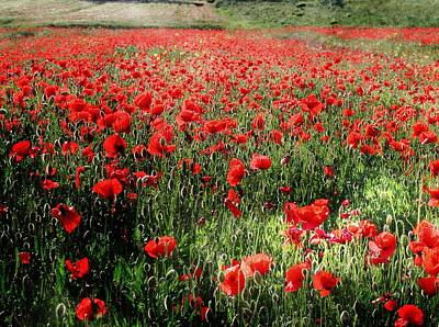 Photograph - Rolling Fields With Poppies by Dorothy Berry-Lound