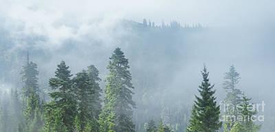 Pine Tree Mixed Media - Rolling Fog by Svetlana Sewell