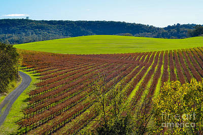 Rolling Hills And Vineyards Art Print
