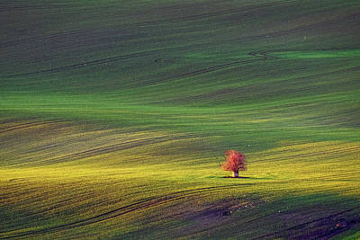 Photograph - Rolling Hills In Moravia #5 by Stuart Litoff