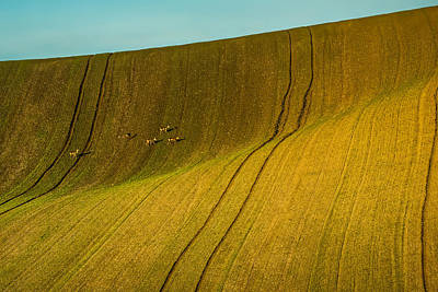 Photograph - Rolling Hills In Moravia #7 by Stuart Litoff