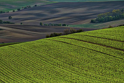 Photograph - Rolling Hills In Moravia by Stuart Litoff