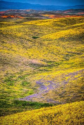 Photograph - Rolling Hills Painted With Wild Flowers by Connie Cooper-Edwards
