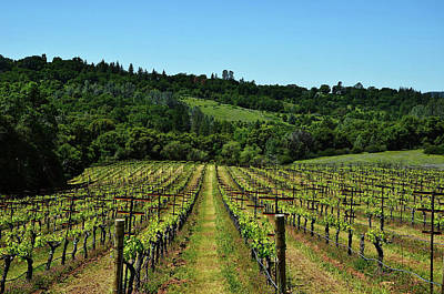Photograph - Rolling Hills Winery Grapevines   by Marilyn MacCrakin