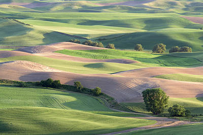 Photograph - Rolling Hillsides by Jon Glaser