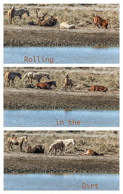 Photograph - Rolling In The Dirt by Belinda Greb