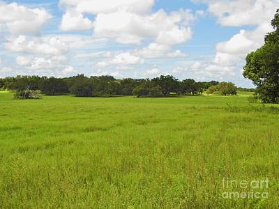 Photograph - Rolling Pasture by D Hackett
