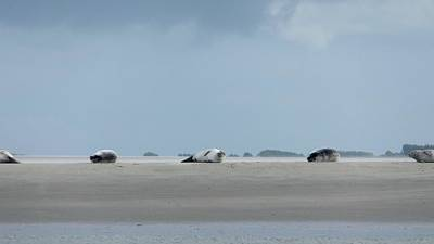 Photograph - Rolling Seals by Marc Philippe Joly