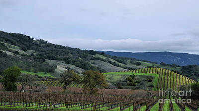 Photograph - Rolling Vineyards by Nancy Chambers