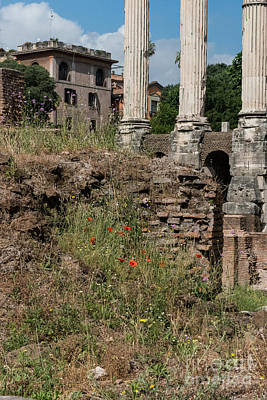 Temple Of Castor And Pollux Photograph - Roman Poppy by Joseph Yarbrough